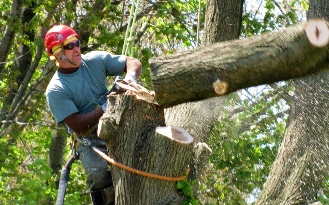 Reasons Why you need an expert Tree Removal Service Company